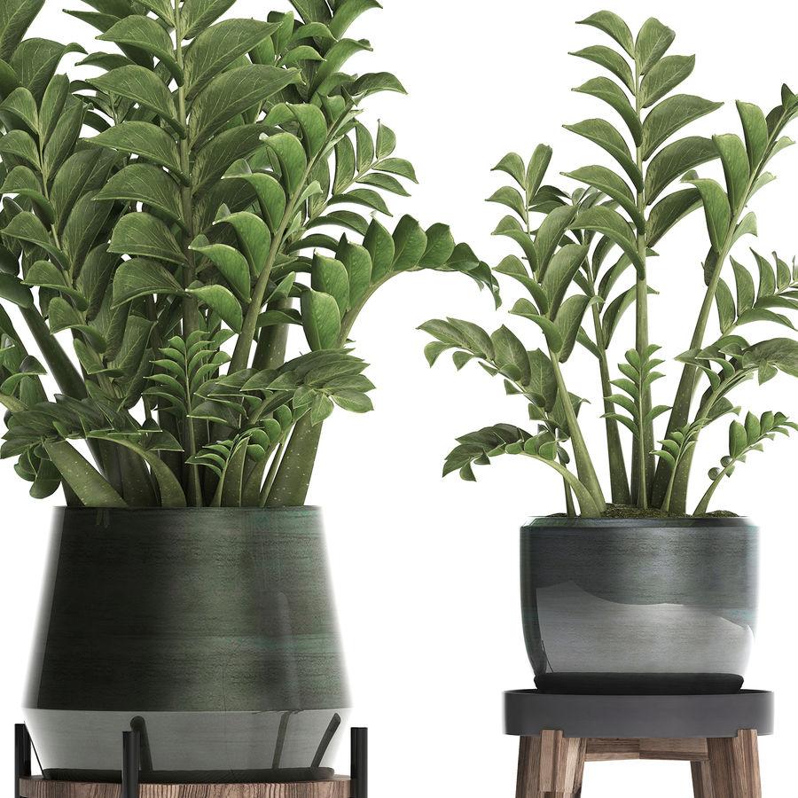 Kolekcja Egzotyczne rośliny w doniczce 449 Zamioculcas royalty-free 3d model - Preview no. 6