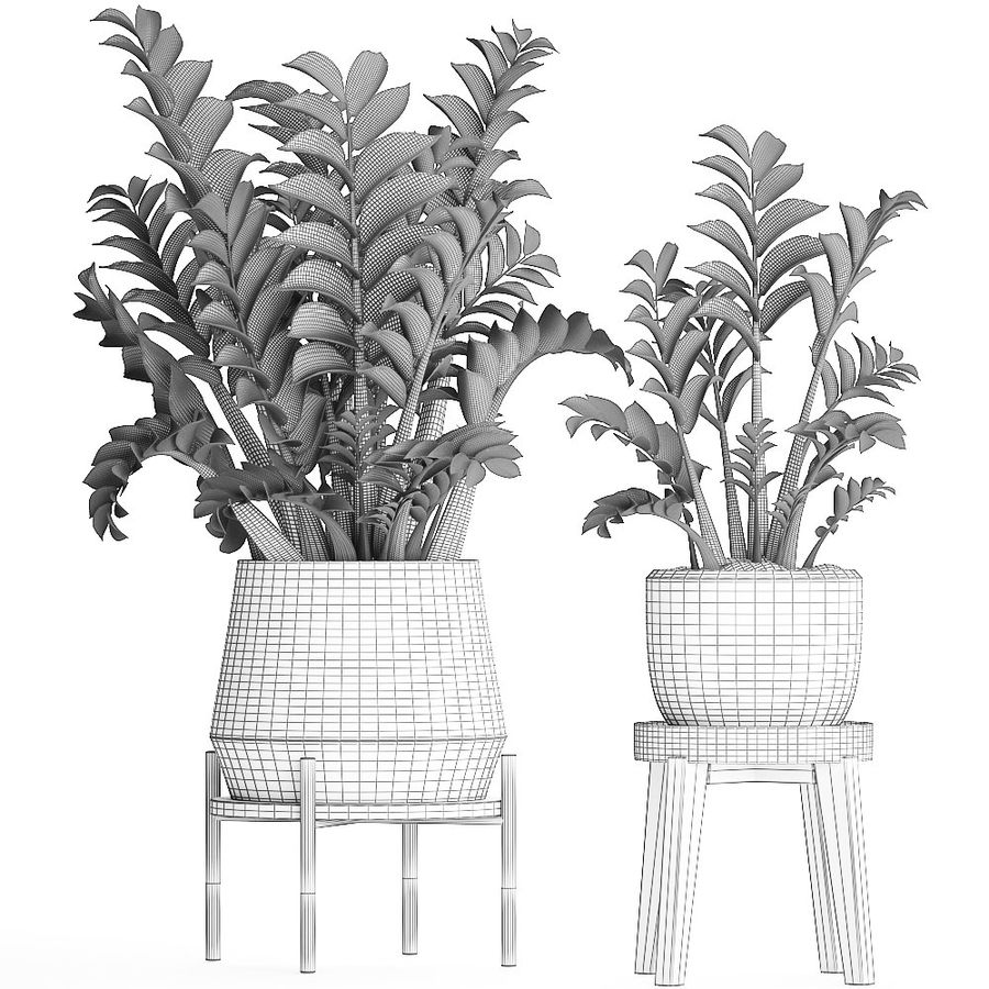 Kolekcja Egzotyczne rośliny w doniczce 449 Zamioculcas royalty-free 3d model - Preview no. 9