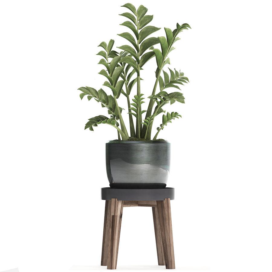 Kolekcja Egzotyczne rośliny w doniczce 449 Zamioculcas royalty-free 3d model - Preview no. 5
