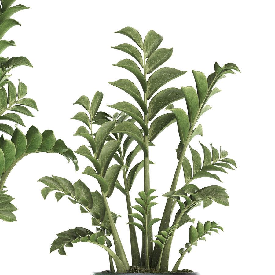 Kolekcja Egzotyczne rośliny w doniczce 449 Zamioculcas royalty-free 3d model - Preview no. 3