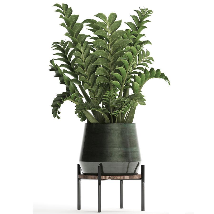 Kolekcja Egzotyczne rośliny w doniczce 449 Zamioculcas royalty-free 3d model - Preview no. 4
