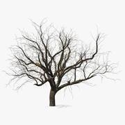 Vinter persikaträd 3d model