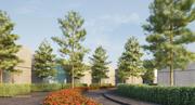 Pinus canariensis 4 3d model