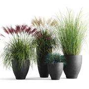 Dekorativa spannmål i planterare 3d model