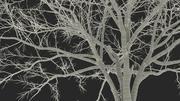 Naken träd 3d model
