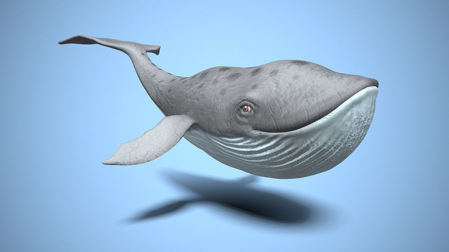 cartoon whale royalty-free 3d model - Preview no. 1