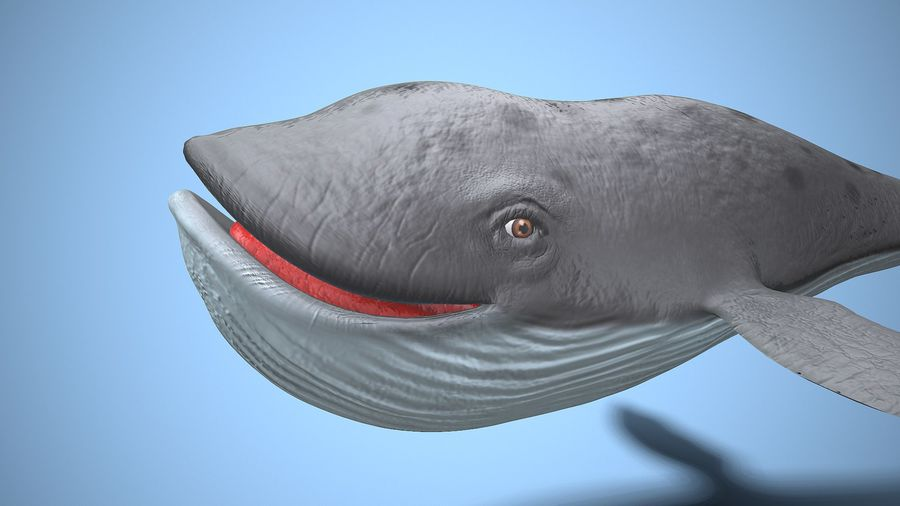 cartoon whale royalty-free 3d model - Preview no. 5