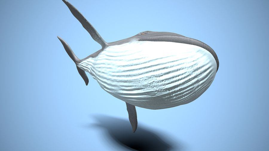cartoon whale royalty-free 3d model - Preview no. 7