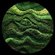 Moss Wall 3d model