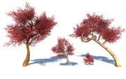 Kleurrijke bomen 3D-collectie 3d model