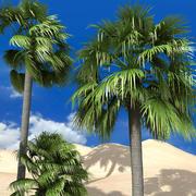 dłoń palmyra 3d model