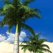 koninklijke palm 3d model