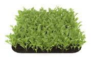 芝麻菜花园床 3d model