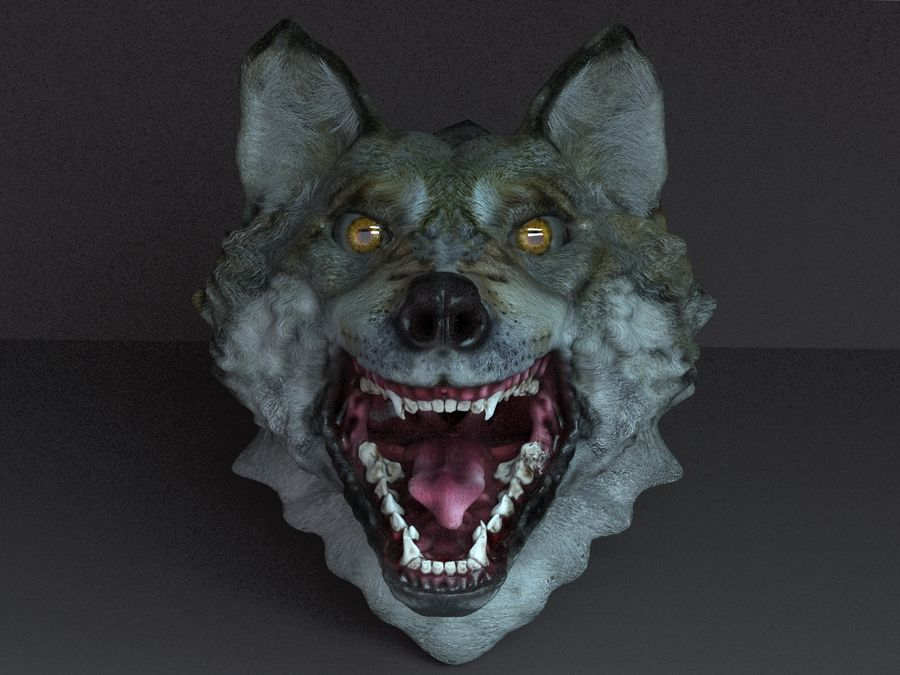Kurt kafası royalty-free 3d model - Preview no. 2