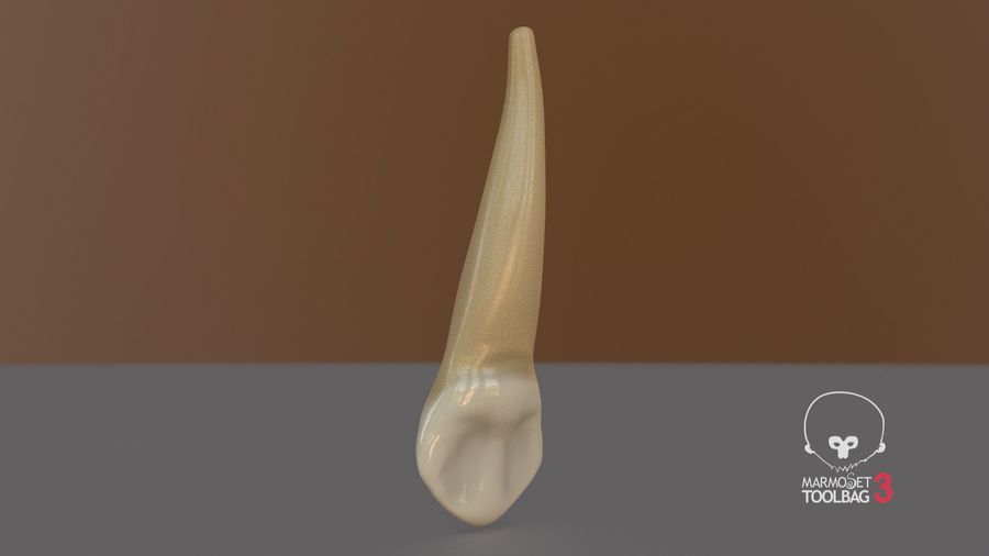 Human Teeth Upper Canine royalty-free 3d model - Preview no. 13
