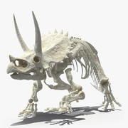 Triceratops Horridus Skeleton 3d model