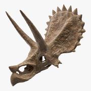 Triceratops Skull Part Fossil 3d model