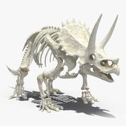 Triceratops Skeleton 3d model