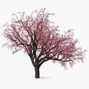 Цветущее персиковое дерево 3d model