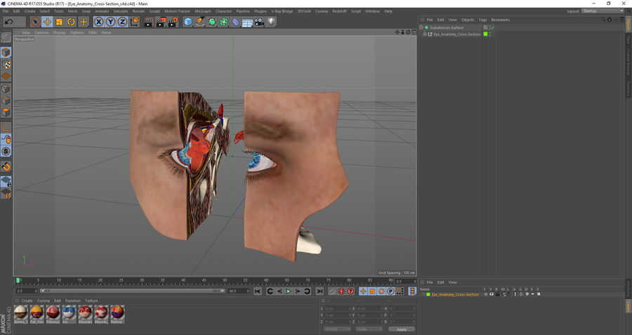 Eye Anatomy Cross-Section royalty-free 3d model - Preview no. 32