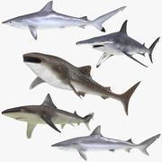 Colección Sharks Rigged 6 para Maya modelo 3d