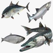Коллекция рыбок 2 Rigged для Maya 3d model