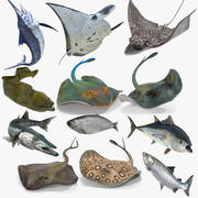 Fishes Collection Rigged for Cinema 4D 3d model