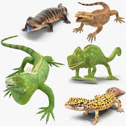 Maya 용 Lizards Rigged Collection 3d model
