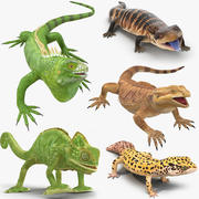 Lizards Rigged Collection for Cinema 4D 3d model