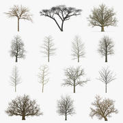 Winter Trees Collection 4 3d model
