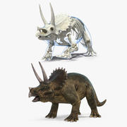 Triceratops mit Skeleton Fossil Collection 3d model