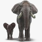 Elephants Rigged Collection för Cinema 4D 3d model