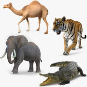 African Animals Rigged Collection for Maya 3d model