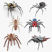 Maya 용 Rigged Spiders Collection 2 3d model