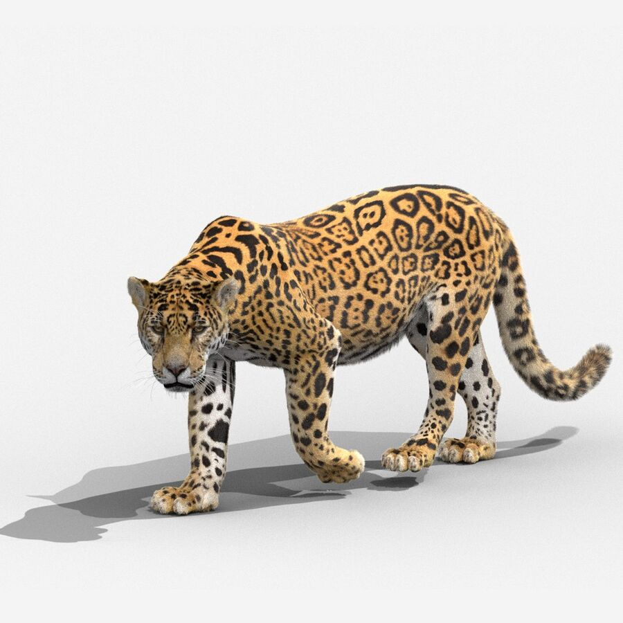 Panthera onca royalty-free 3d model - Preview no. 1