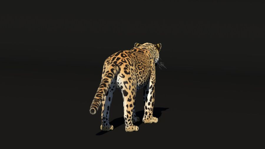Panthera onca royalty-free 3d model - Preview no. 5