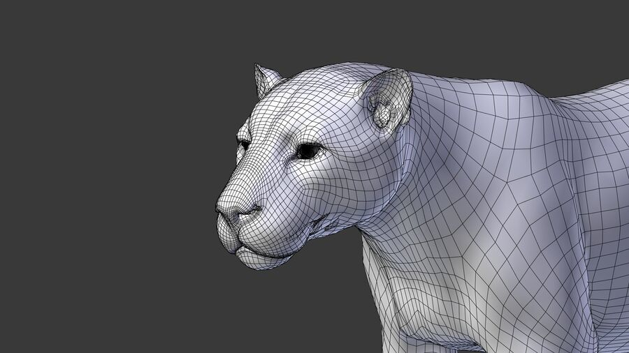 Panthera onca royalty-free 3d model - Preview no. 16