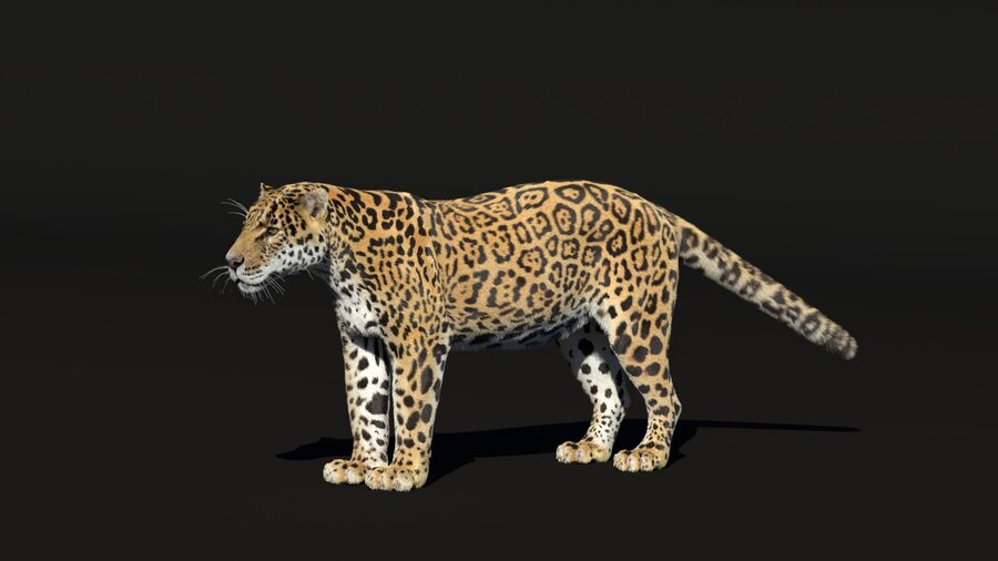 Panthera onca royalty-free 3d model - Preview no. 2