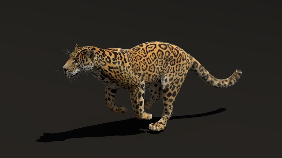 Panthera onca royalty-free 3d model - Preview no. 9