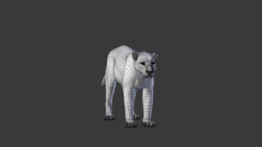 Panthera onca royalty-free 3d model - Preview no. 12