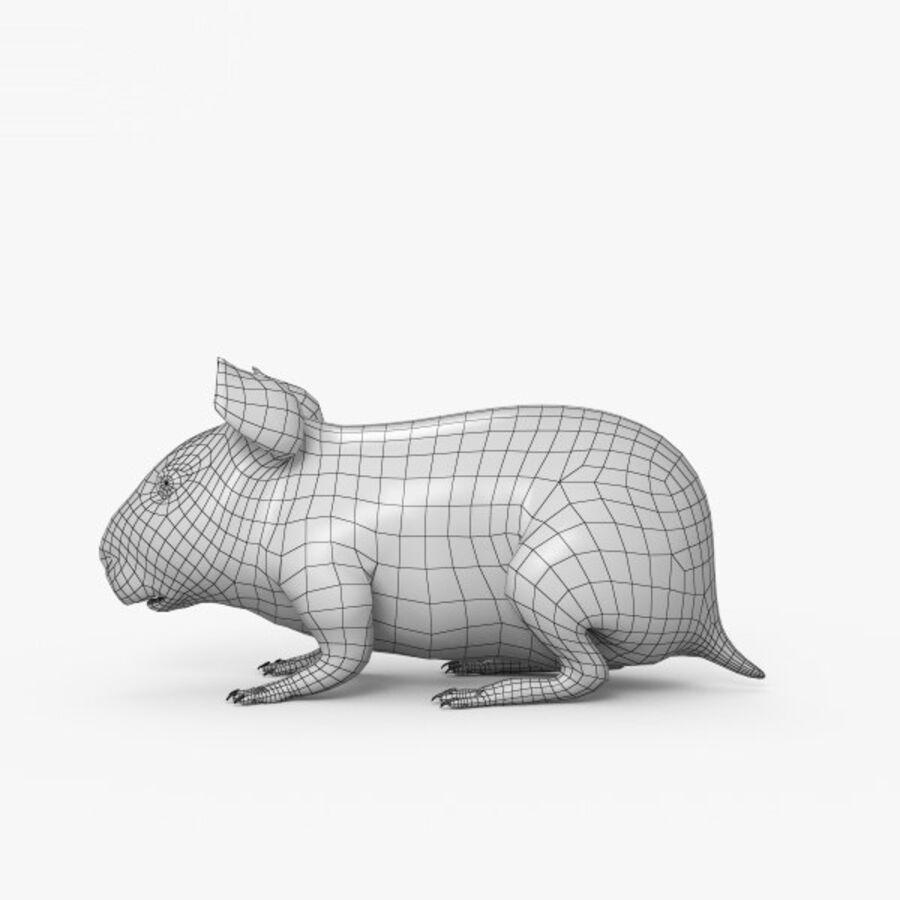 Meerschweinchen HD royalty-free 3d model - Preview no. 9