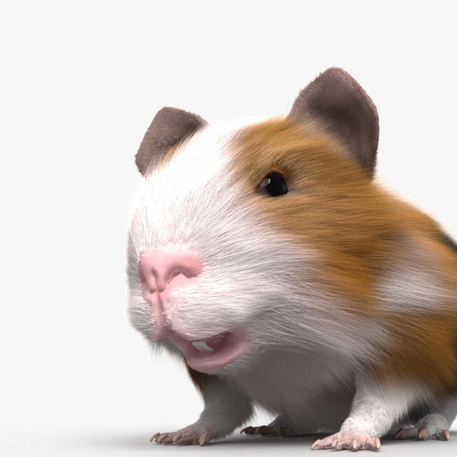 Meerschweinchen HD royalty-free 3d model - Preview no. 6