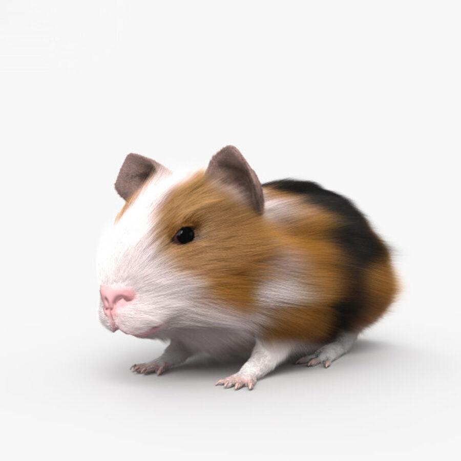 Meerschweinchen HD royalty-free 3d model - Preview no. 1