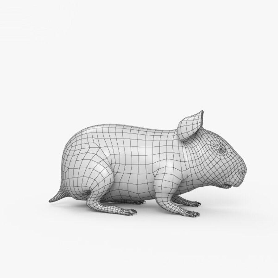 Meerschweinchen HD royalty-free 3d model - Preview no. 17