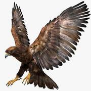 Golden Eagle Fur Animated Rigged 3d model
