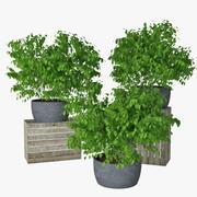 Kleine Pflanze 09 3d model