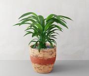Roślina doniczkowa 3d model