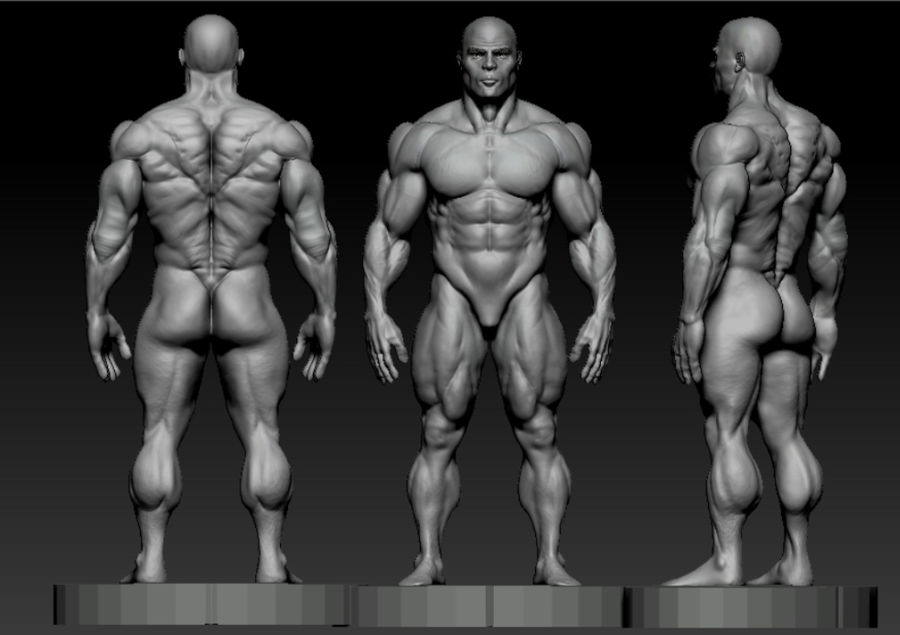 base mesh bodybuilder royalty-free 3d model - Preview no. 1