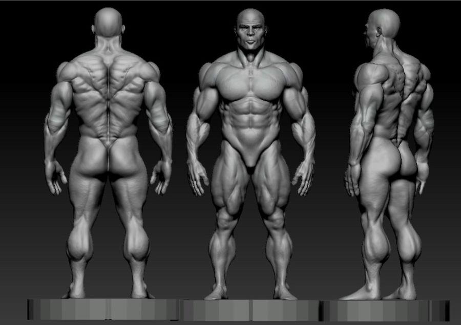 base mesh bodybuilder royalty-free 3d model - Preview no. 4