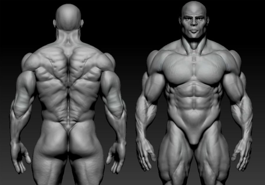 base mesh bodybuilder royalty-free 3d model - Preview no. 1